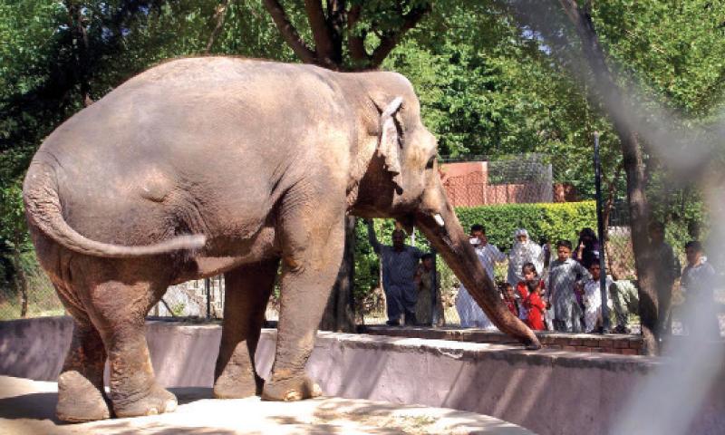 Zoo-Islamabad-Zoo-Marghazar-Zoo.jpg